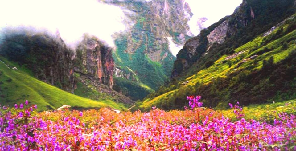 Tempo traveller for valley of flowers
