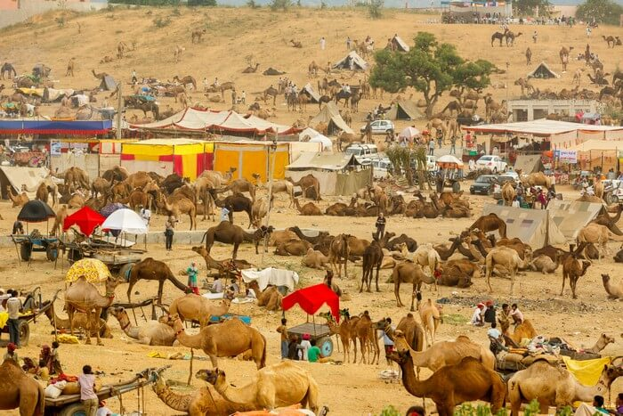 Reason for growing popularity of Tempo traveller for Pushkar