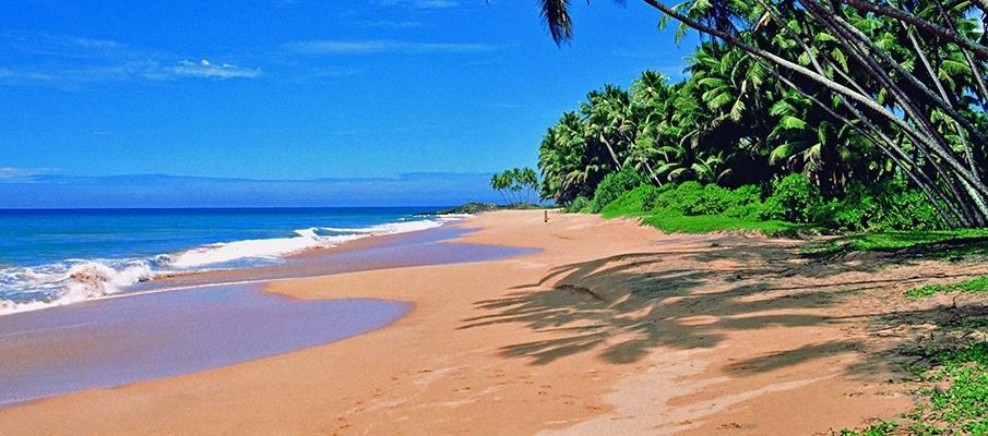 Travelling in the tranquil beaches of Goa