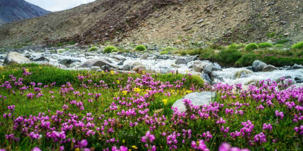 Top five places to visit in India during spring