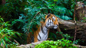 1Night/2DAY trip to Jim Corbett National Park
